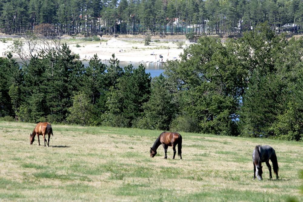 Equitation à Saint-Ferréol